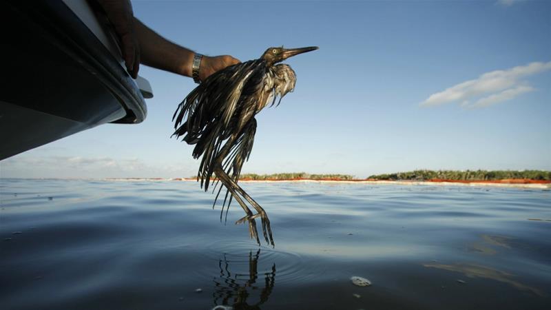 Ex-US wildlife chief: Trump plan could kill billions of birds aje.io/gp8xk