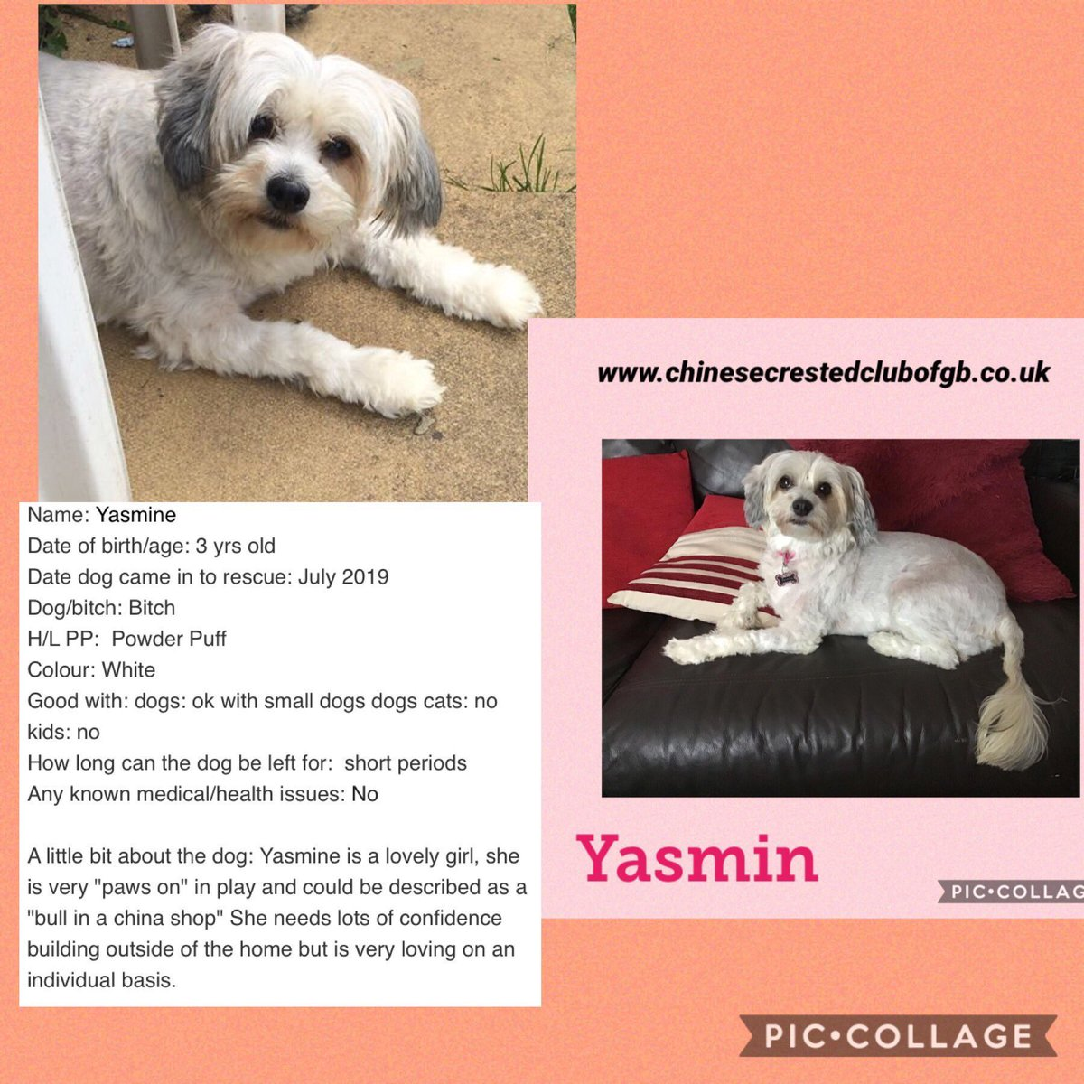 #WednesdayWisdom #WednesdayThoughts  #pretty little poppet #Yasmin will be looking for a super duper home after #Lockdown is over #TeamZay #itsallaboutthedogs @CCCGBR
