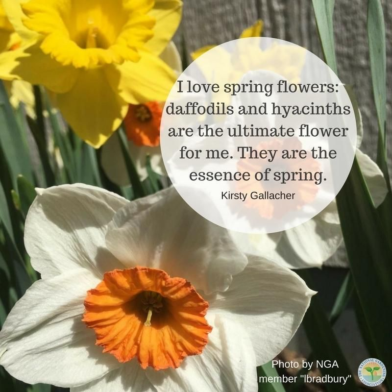What is the first spring flower you get in your garden? #spring #flower #daffodil #hyacinths #pretty #gardens #gardening #grow #growing #nature #NGA -
