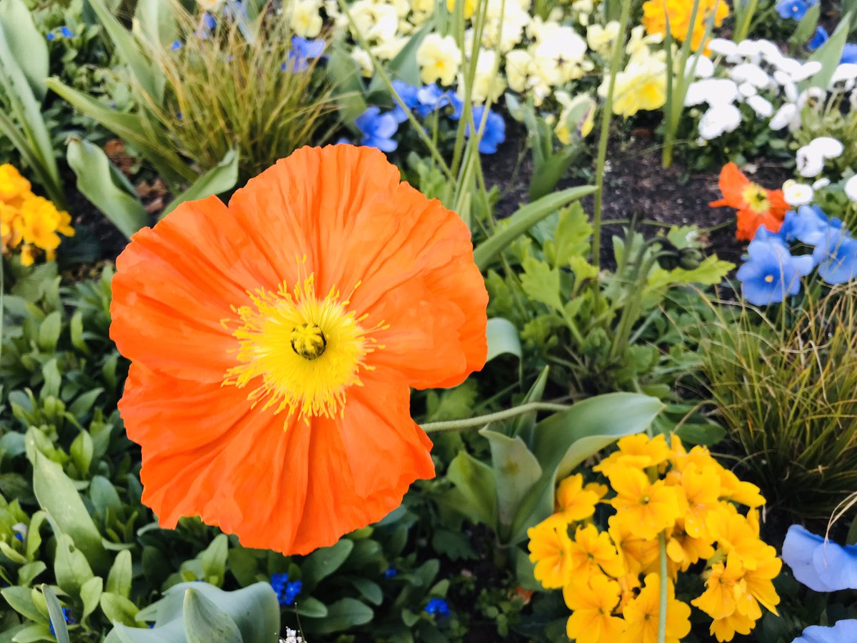Un peu de #couleur... #photo #Photographie #photography #fleurs #Flowers #FlowerPower #nature #naturelovers #naturephotography #confinement #coronavirus #covid19pic.twitter.com/4m35yCHYXq