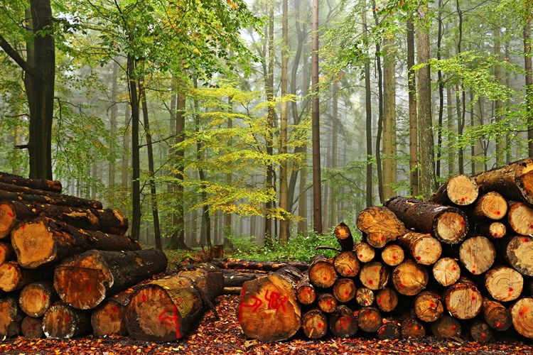 👏#GlobalResourceInitiative report & its target to end #deforestation in our food, farming & forestry supply chains When the time is right after #COVID19, Govt. must join the dots between climate, nature & human health & accept the recommendations in full ow.ly/mRwa50z2fUu