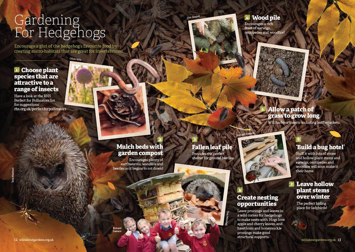 For more ways you can help #hedgehogs this #WildlifeWednesday, pop over to our Facebook page for lots of tips, advice, and activities all the family can get involved with - facebook.com/ulsterwildlife