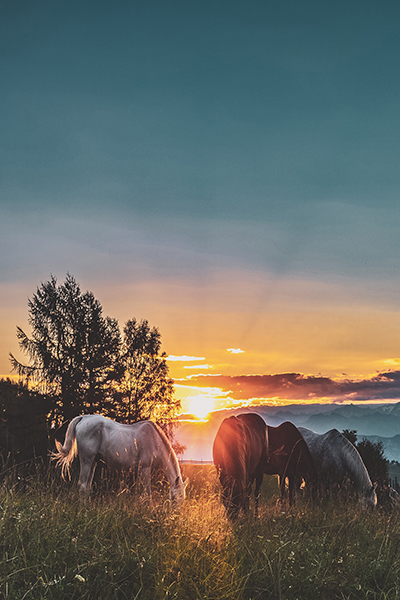 There are plenty of ways to enjoy the Smoky Mountains - including by horseback!  Check out some of the places you can ride in the national park and nearby towns:  https://patriotgetaways.com/blog/horseback-riding-smoky-mountains/ … #PatriotGetaways #Horsebackriding #horsespic.twitter.com/QOkgaj753j