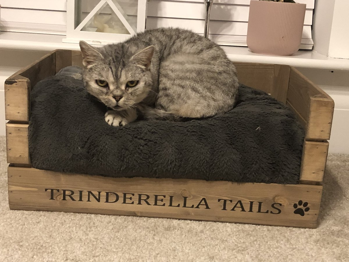 This is my princess Nelly. She's related to the cat in the first Harry Potter film as she's a superstar xx #harrypotter #silvertabby #britishshorthair #trinderella #trinderellatales #trinderellatails #ivegot7dogs2catsandagorillainmybackgardenpic.twitter.com/81NDPjvcXN