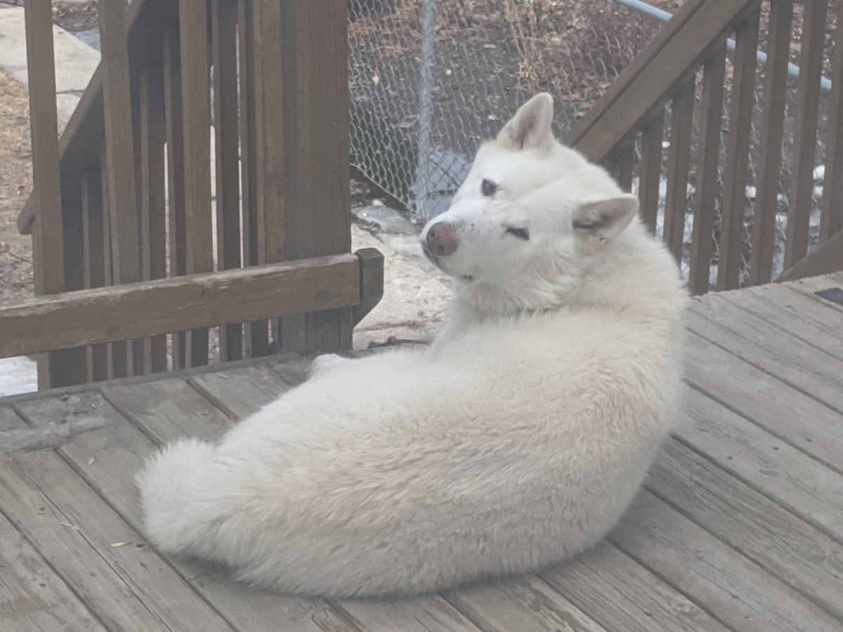@SustainedNorth it's Birch! Howl's napping on the porch :)