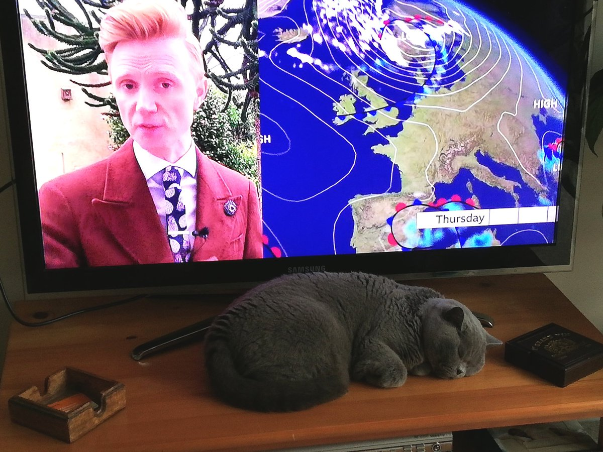 Here's a photo of Lillie the British shorthair listening to the weather, although she might be asleep pic.twitter.com/mz7xKzbRJa