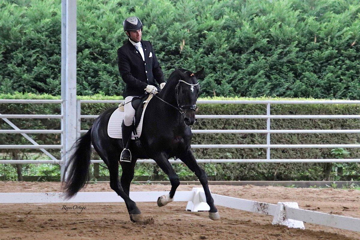 Recuerdos...  🐎 Júpiter JAP (Javir del Jut y Manzanillo JAP) en la Final del Master del Caballo Ibérico en París 2019   #yomequedoencasa #stayhome #staysafe  #CaballosPRE #CaballoEspañol #PuraRazaEspañola #SpanishHorse #AndalusianHorse #semental #stallion #equestrian