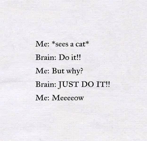 Sorry I can't control my brain #meowed #meowedofficial #TheMeowedClub
