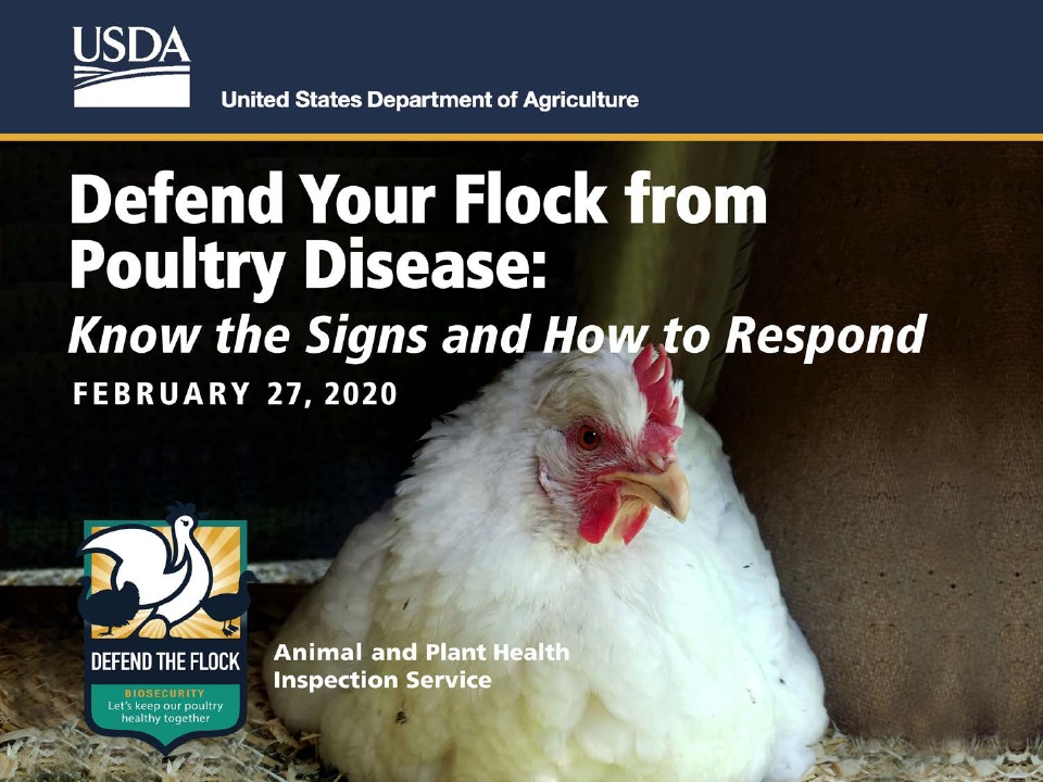 """Preventing disease will help keep all flocks healthy. Replay our webinar, """"Defend your Flock from Poultry Disease: Know the Signs & How to Respond,"""" with @U.S. Department of Agriculture/APHIS vets and state poultry experts. Click here: http://bit.ly/DefendtheFlock-Resources…pic.twitter.com/yta74bMD0y"""