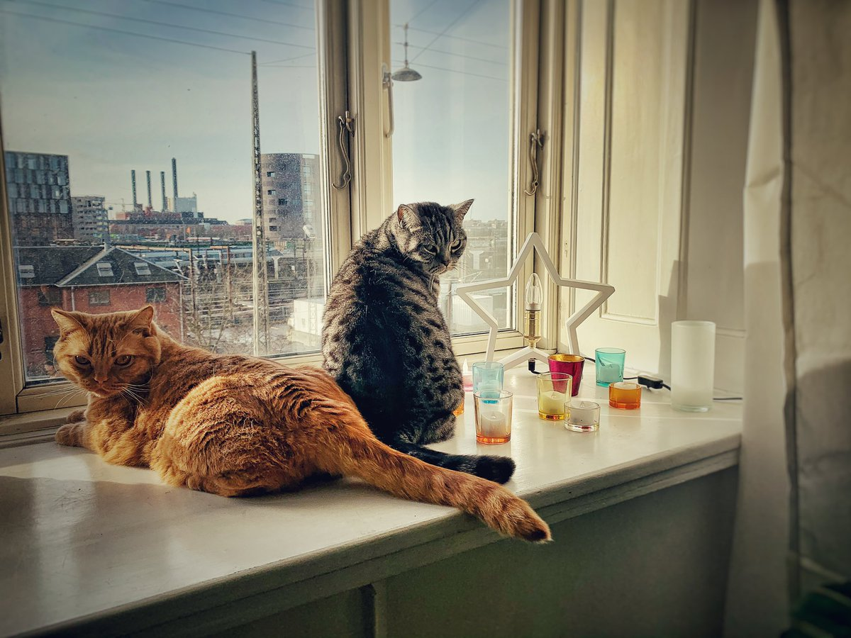 Thanks Larry!  Fabian & Luna – our two resident #BritishShorthair cats – are monitoring that hoomans are adequately socially distancing from their outpost here in Copenhagen, DK.  So far it's looking good pic.twitter.com/1qxokWle10