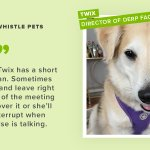 Image for the Tweet beginning: Meet Whistle Work from Home
