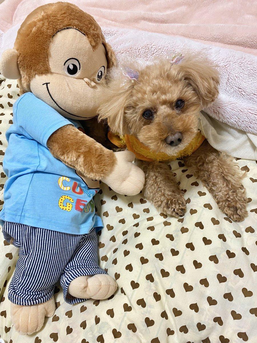 おはようございましゅジョージくんに起こされちゃった 今日一日がんばりましょう #wanko #dog #inu pic.twitter.com/XFTfxzWbhQ