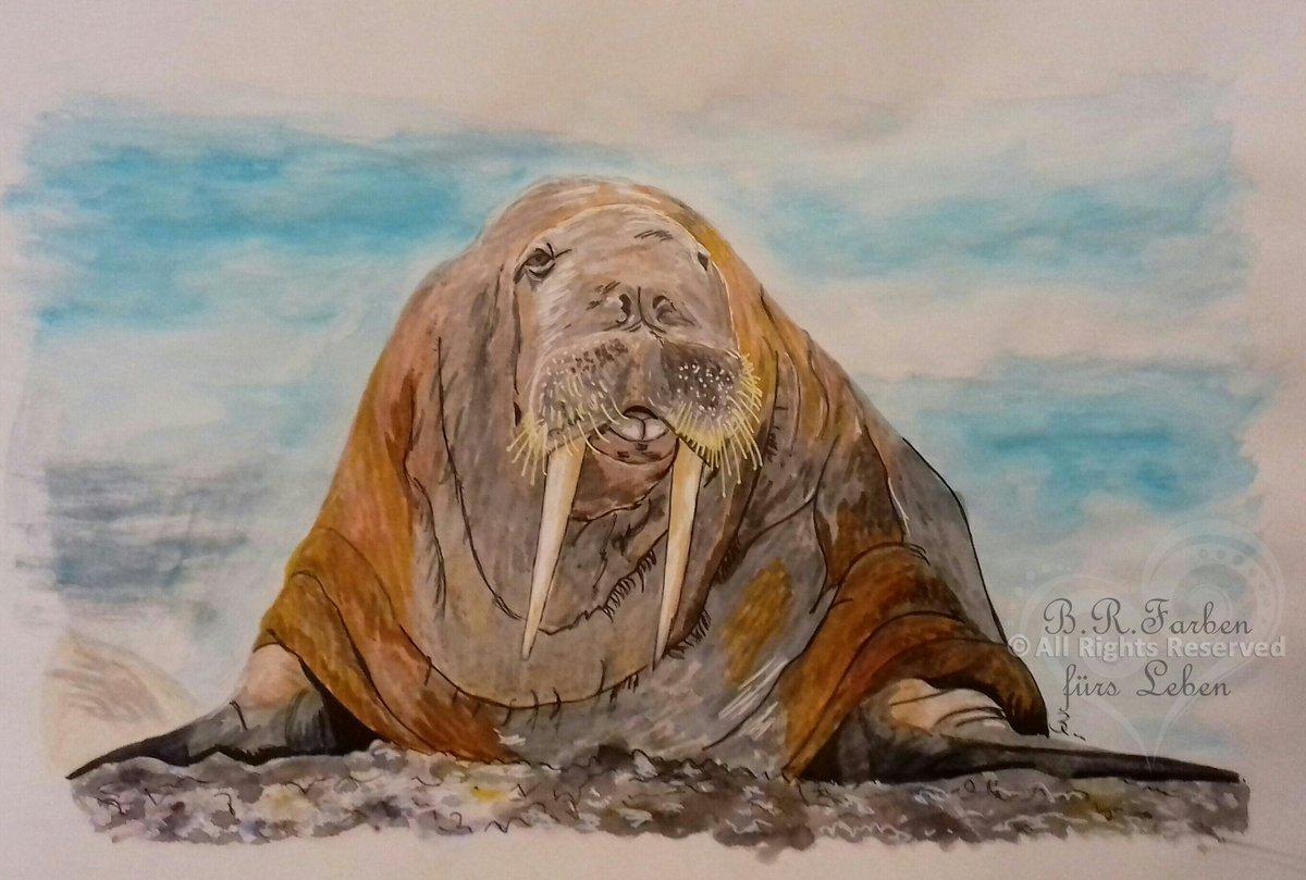 Here is my walrus for #pinchpunchpost @pinchpunchpost for April. #kleineKunstklasse #illustration #artwork #nature #ocean #FarbengegenAngst #ColoursagainstFear #alleswirdgut #tuttoandrabenepic.twitter.com/vXvtzliiTq