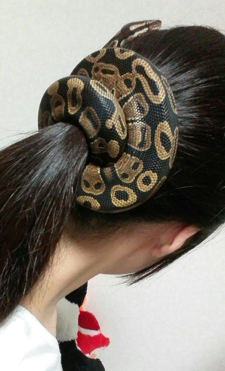 飼い主の頭が落ち着く蛇さん
