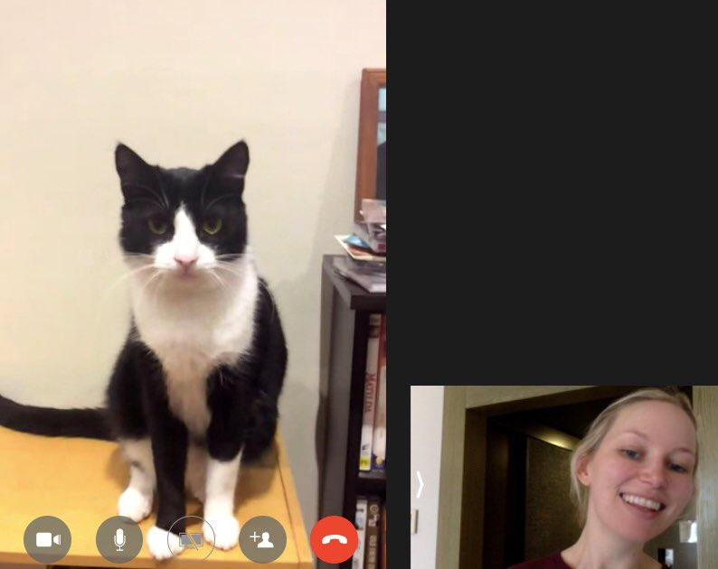 In good news, I FaceTimed with my mum's new cat. Her name is Pickles