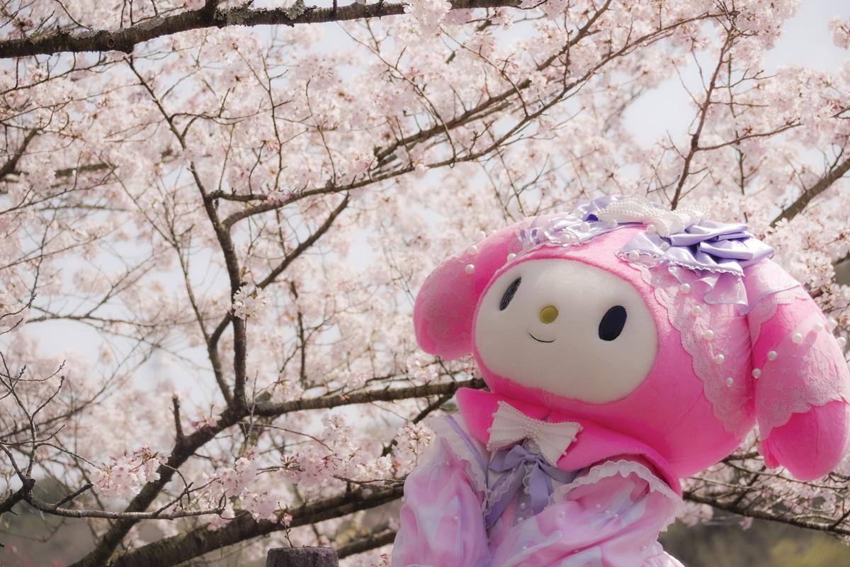 ハーモニーランドの桜は満開です♪#ハーモニーランド #マイメロディ#桜 #満開