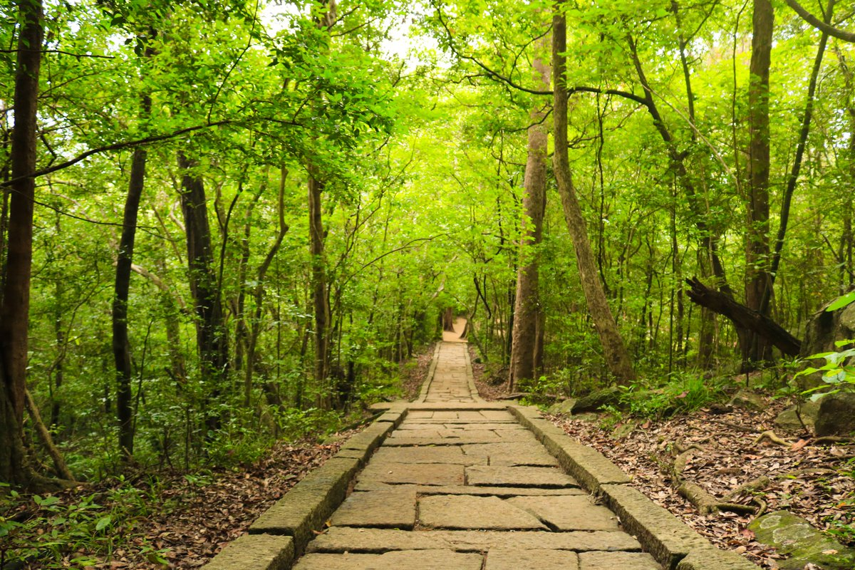 Ritigala Forest #srilanka #visitsrilanka #nature #trees #beautifuldestinations #LK #travelling #travel #traveling #vacationspic.twitter.com/2GSCXR3asr