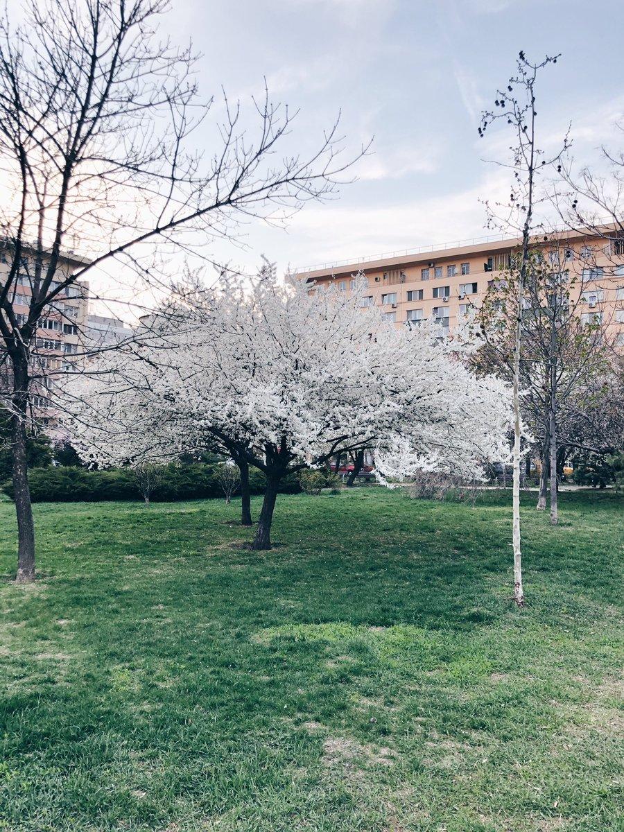 . . #bucuresti #bucharest #flowers #spring #springflowers  #communityfirst  #createexplore  #BeautifulDestinations  #exploreeverything  #splendid_shotz  #artofvisuals  #visualsoflife  #hot_shotz  #earthpix  #exklusive_shot  #beautifuldestinations pic.twitter.com/Eq2ZUrFMQ1