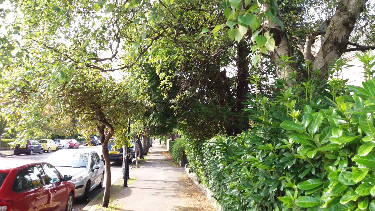 When going out for your daily exercise maybe you can take a look at the trees in your street, find out what type they are and send us a photo. #streettrees @WoodlandTrust @EdinOutdoors