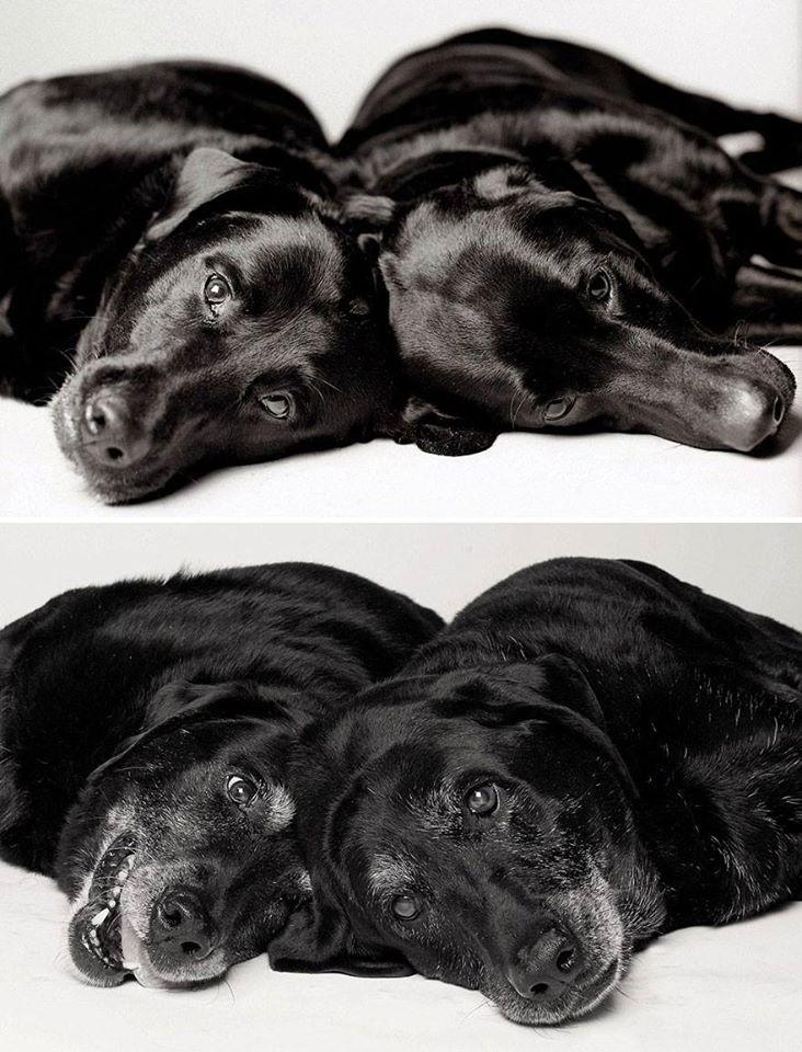 """""""Los perros no son todo en nuestra vida pero ellos la hacen completa."""" - Roger Cara - #perros #dog #olddog #jueves"""