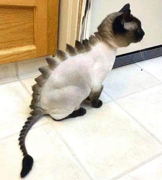 Cool cat! #Creative home projects help! #ThursdayThoughtspic.twitter.com/kIYihVVTyo