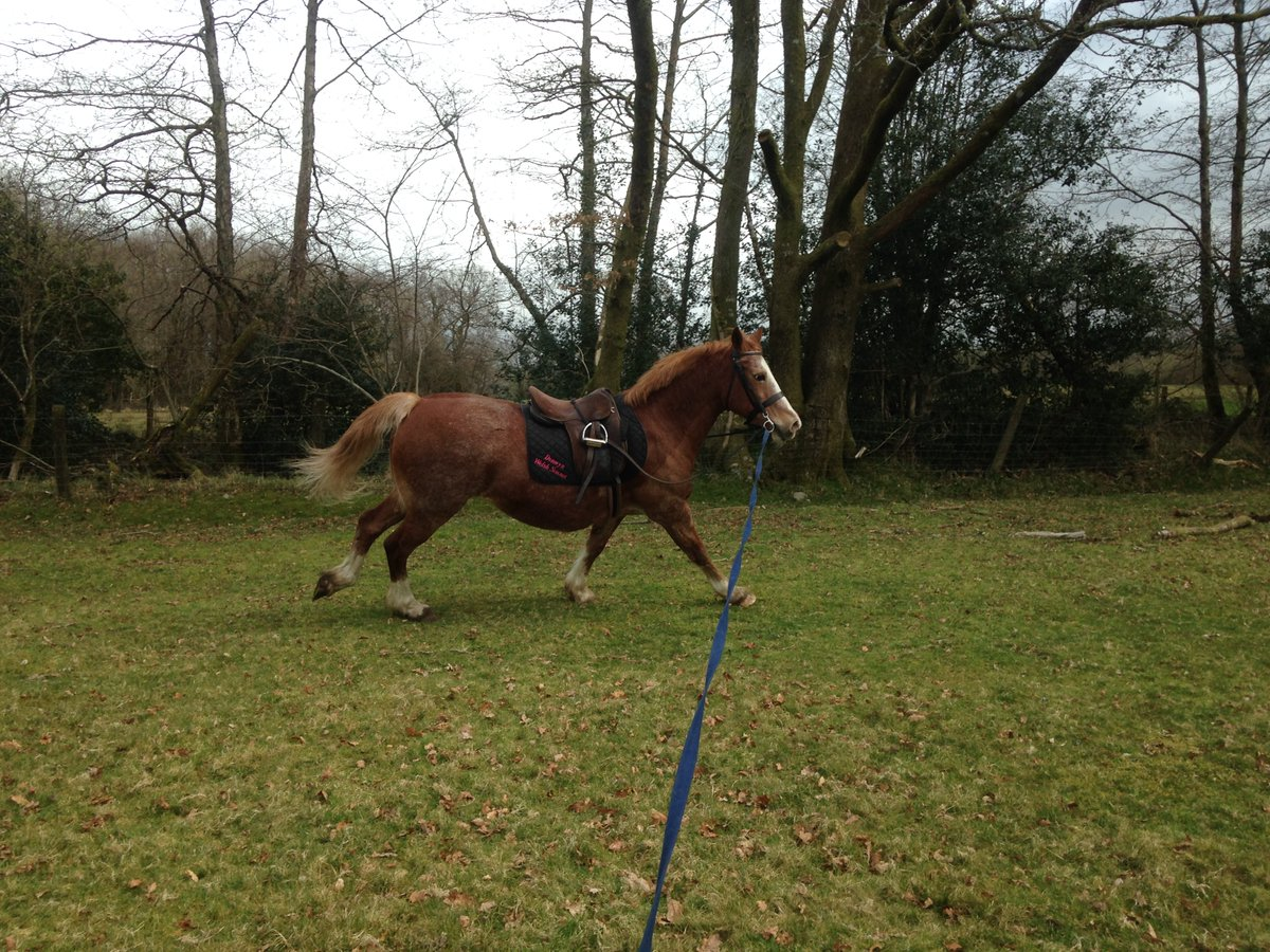 Been riding, spending time with our animals is always the highlight of our day  #horseriding #welshcob #wales #riding #horsebackriding #countrylivingpic.twitter.com/N5JlRWq22B