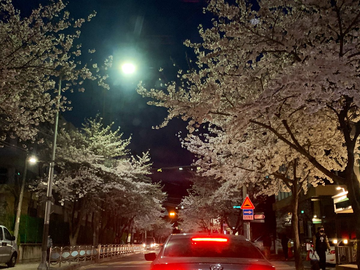 Great to see this Cherry Blossom on my car before waiting for left turn signal. This is located near Yangjae-cheon stream and it's located near my home. Gangnam-gu said it'll shutdown its stream walking area to stop spreading #CoronaVirus this weekend. #Seoul #Koreapic.twitter.com/fwsstjyWJn