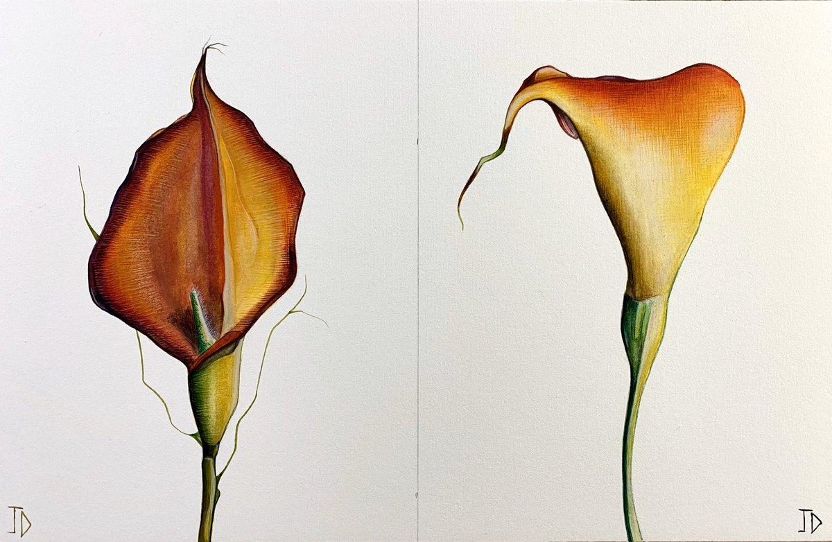 Original double flowers Lillie no25. Watercolour on arches paper paper 28 x 19 cm. JDavies artworks 2020. #painting #art #watercolour #contemporary arts #acrylic #art Gallerists #surrealism #graffiti #drawing #artist #watercolour paper #canvas #flowers #brushes #modern #linenpic.twitter.com/s5fIV2AlBL