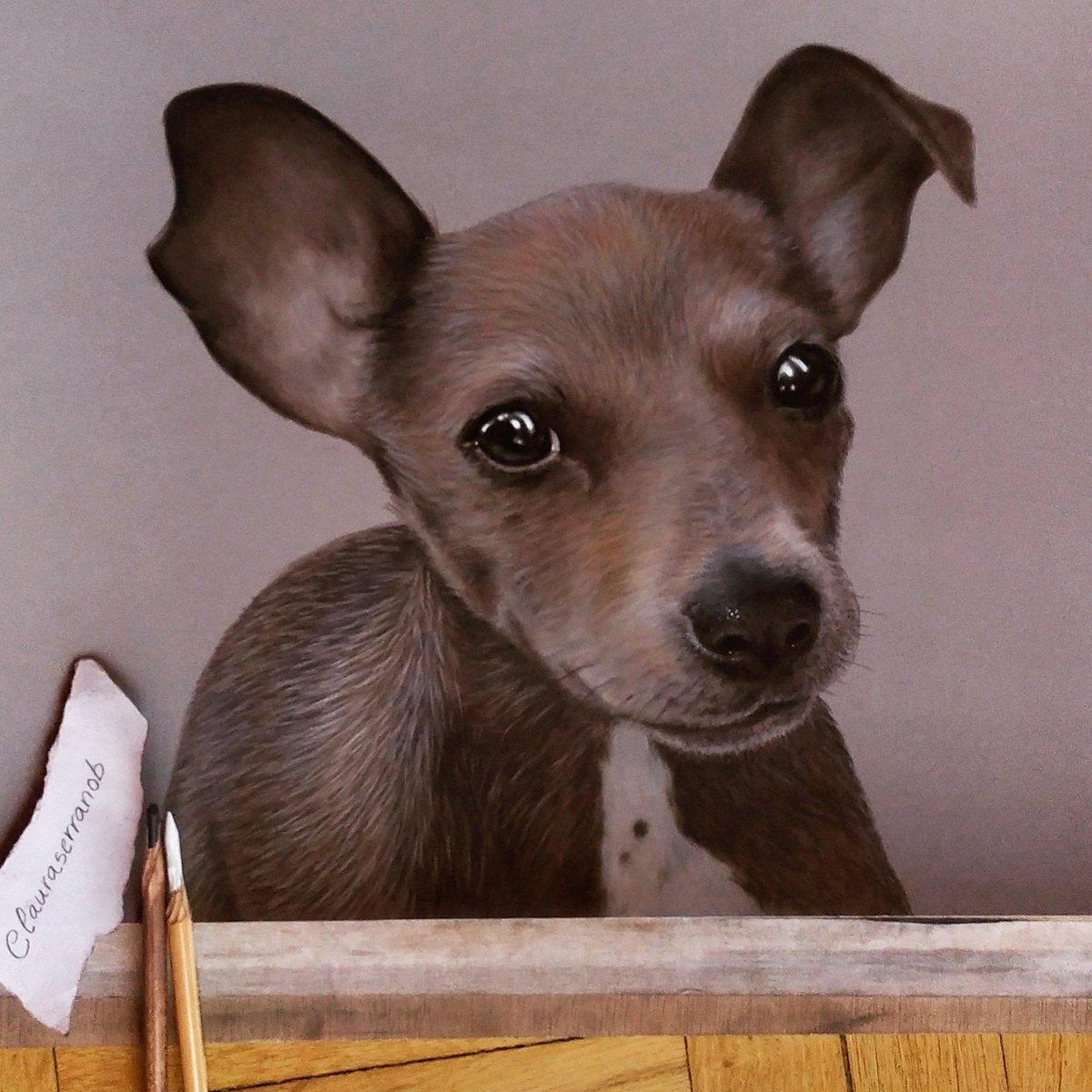 Chispa  La perrita de mi amigo @JessFernndezMo4 #dibujo #drawing #retrato #portrait #dogportrait  #dogdrawing #softpastel #pencil #pencildrawingpic.twitter.com/piT6r9gdbK