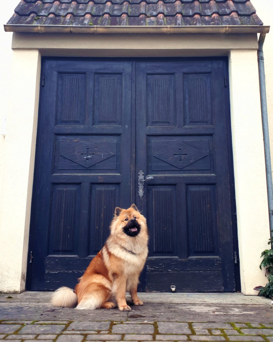 when one door closes another opens... let's look for an open door together!!  #dog #dogsofinstagram #pet #petsofinstagram #animalsofinstagram #cuteanimals #cutedogs #aesthetic #instadog  #eurasier #nofilter #puppy #fluffy