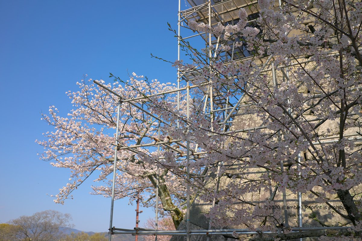 いつもある風景は今しか撮れない風景かも、桜2020今日の1枚は 'under construction' #桜 #photo #松山城  ...ホームページビルダー世代ですから、Sorry, Japanese only ですから、ひきこもりいいじゃないか You're Only Lonely (昨日の What A Fool Believes につづいてザックリ80's)