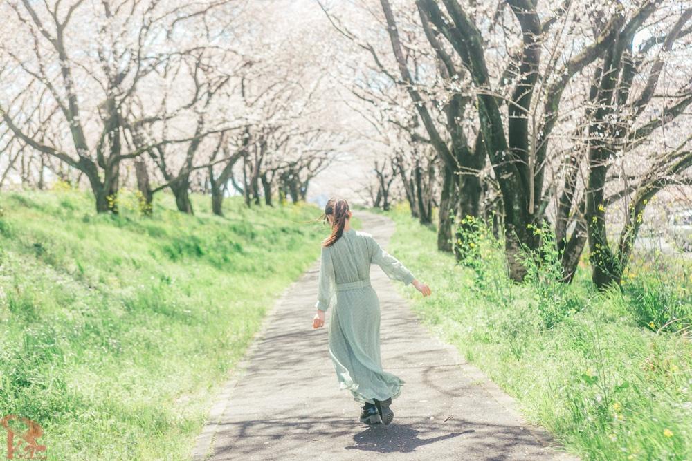 振り返ったその笑顔は 悲しいくらい綺麗だったんだよ  春のなかで  #桜 #桜作品でTLをお花見会場にする  #photo #photography  #ラストシーン