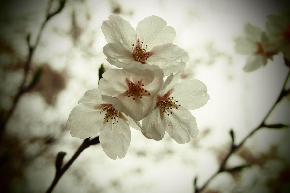 #photo #snapshot #春 #写真