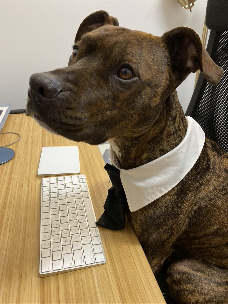 @darth We've tried telling Jerry he doesn't need to dress up to work from home, but he insists!