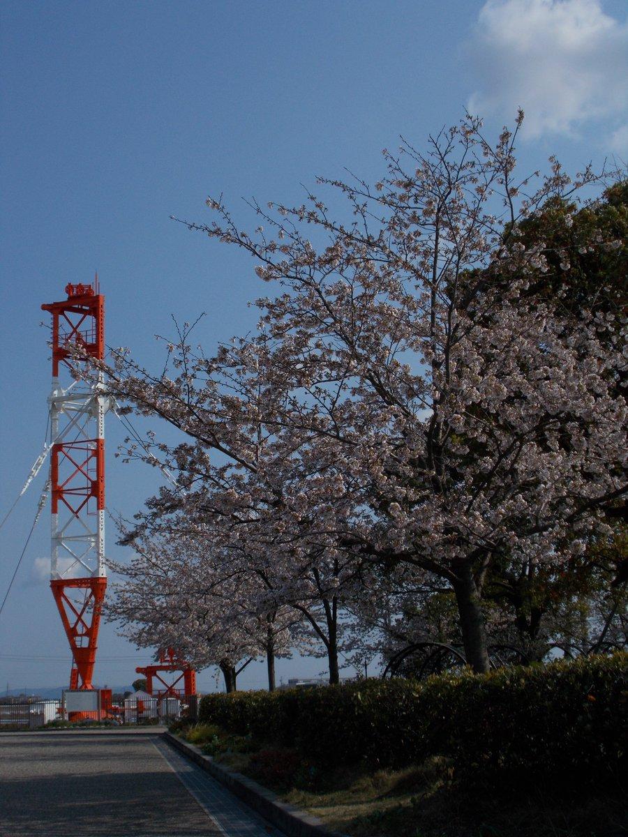 満開 桜 前線 2020