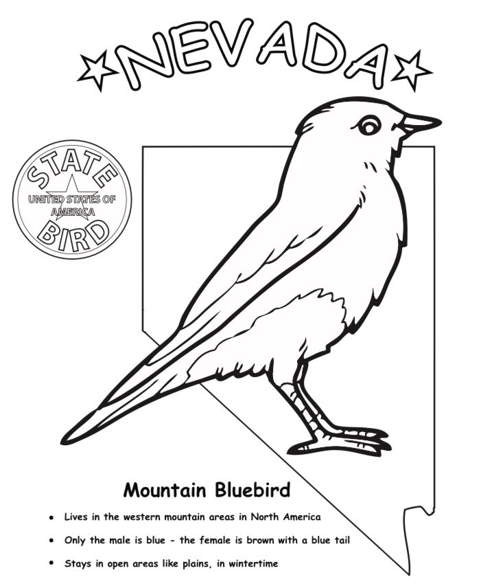 Carson The Tortoise On Twitter Did You Know That Nevada S State Bird Is The Mountain Bluebird The Worksheet Below Lists Some Fun Facts As Nevada S State Reptile It S Fun To Share Nevada