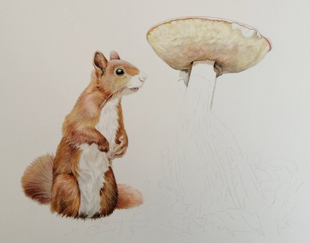 Couldn't resist taking a break from my red squirrel to make a start on the toadstool.  #workinprogress #squirrel #toadstool #wildlifepic.twitter.com/fWsqjU9yRT