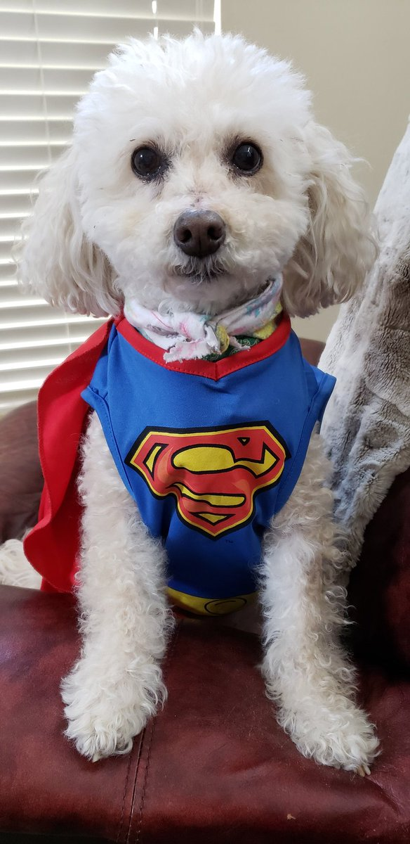@wmscats  Chloe wanted to dress up for #virtualspiritweek. #Superheroes pic.twitter.com/46rvuP4ELq