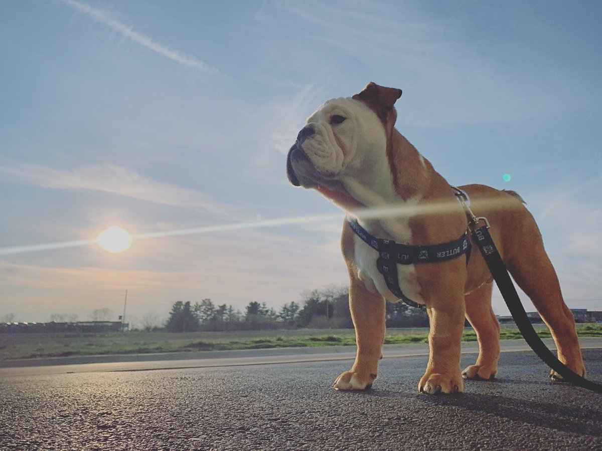Now this is what I call Bulldog weather. 😊☀️🐶
