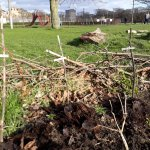 Image for the Tweet beginning: Tatties planted in the warm