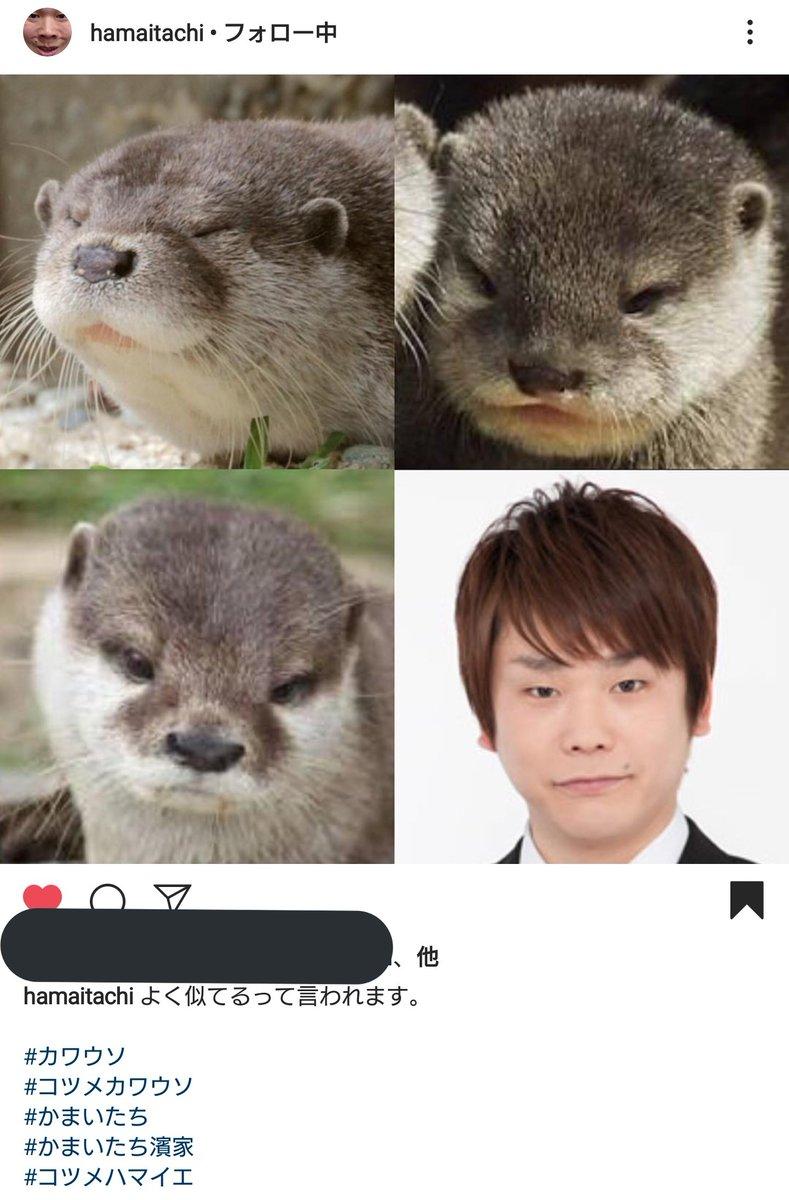 カワウソ 濱家