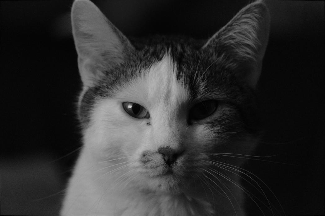 our cat maxim...  #cat  #Vienna pic.twitter.com/4I9haULv9V