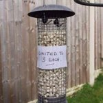 Image for the Tweet beginning: Sorry birds 🤣😂