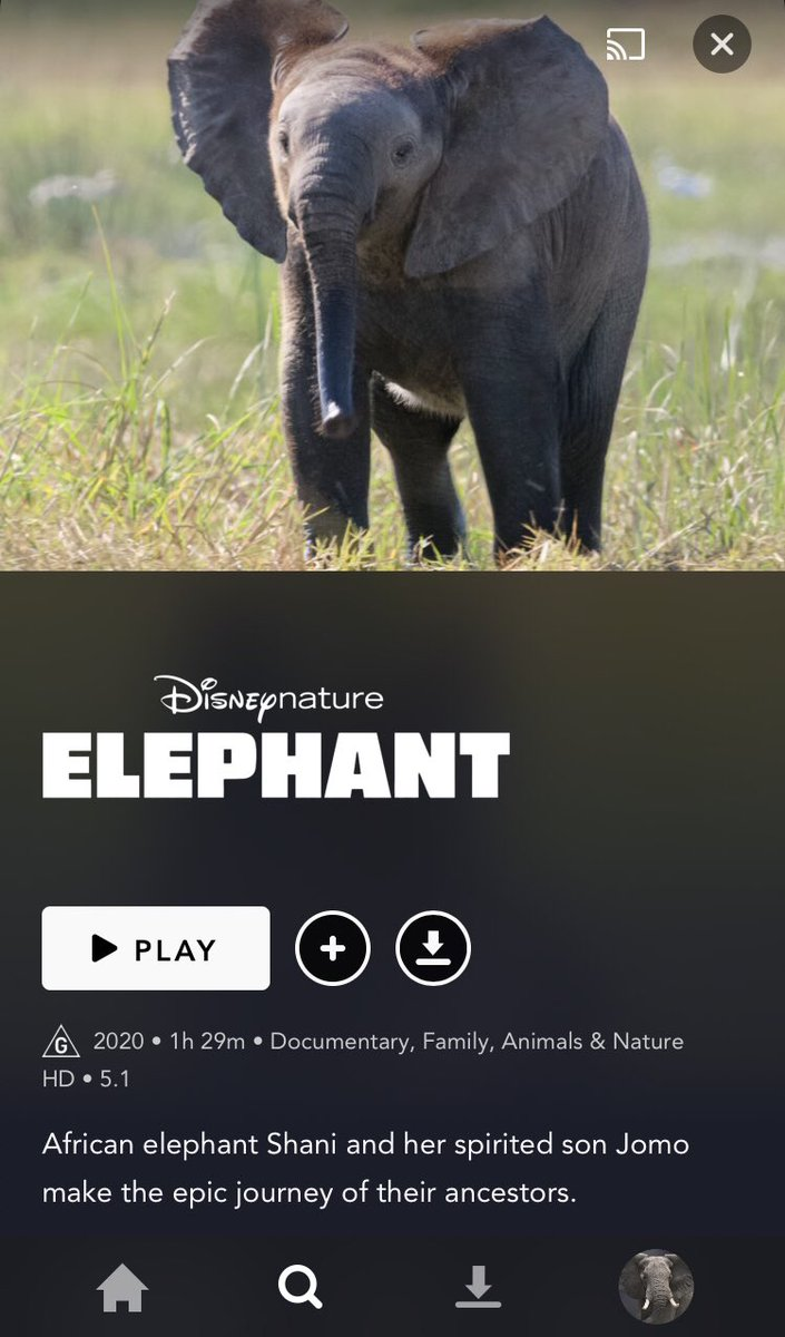 RT @ddarveyy: elephant is out! i'm so excited 😭 make sure to use the hashtag #ElephantOnDisneyPlus ‼️ https://t.co/cglC8nVrgA