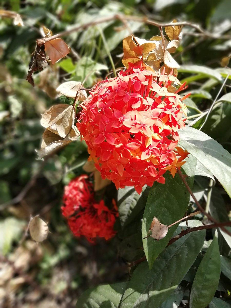 Flowers in my garden   #Flowers #LoveFlowers #NaturalBeauty pic.twitter.com/fkWyN9UzTR