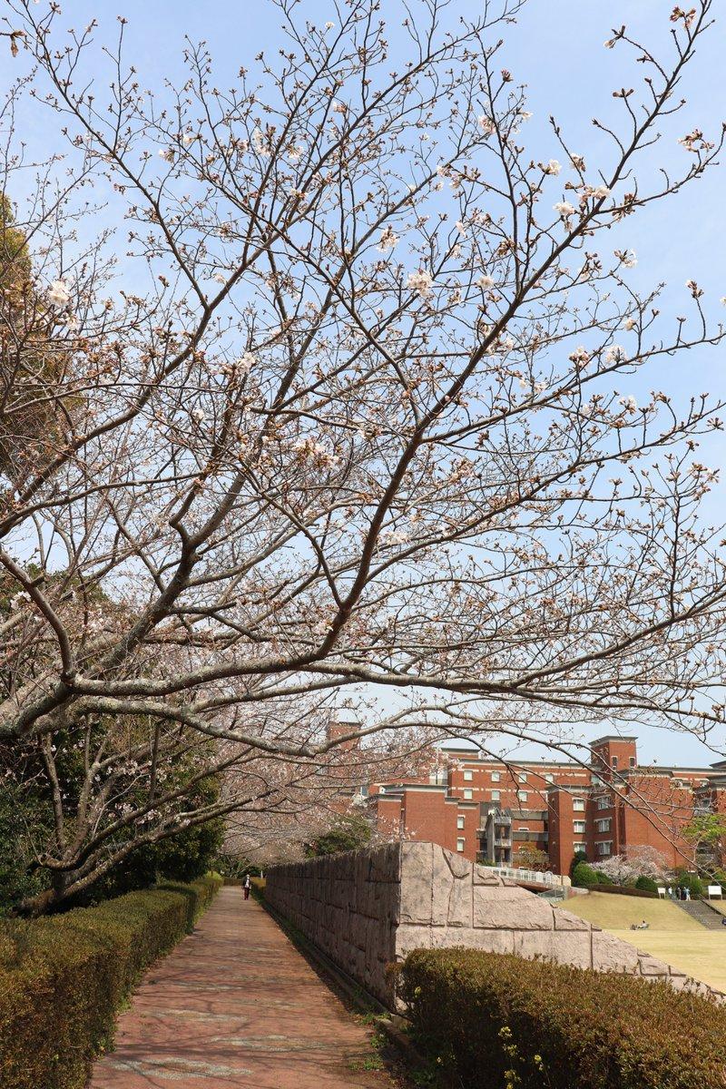 静岡 県立 大学 ユニパ