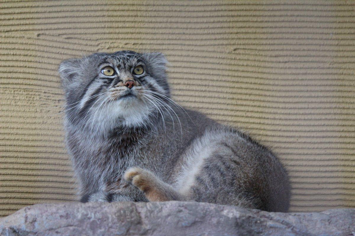 旭山 動物園 ツイッター