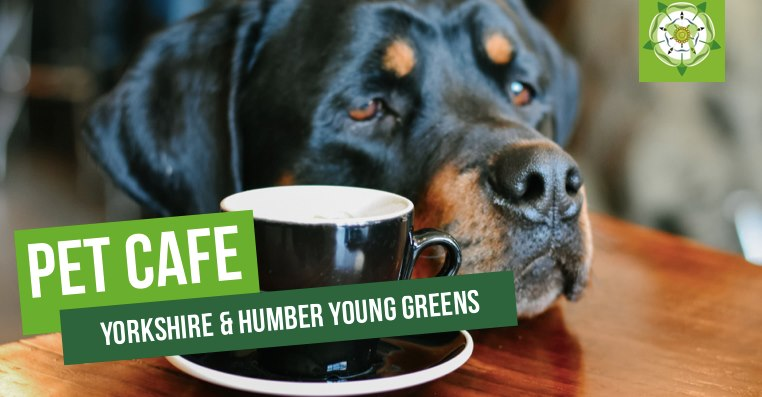 Hey all you cool cats and kittens, we have another super fun social for you - hosted by the brilliant @YHYoungGreens!💚🐶🐱🐅 facebook.com/events/3923707…