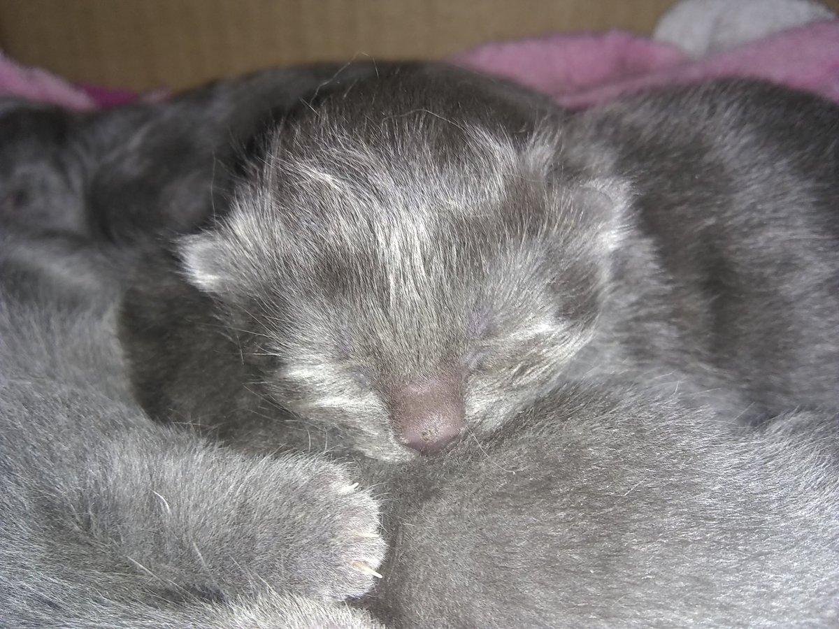 #tendresse  #gatitos #Kittens #bebés #CuarentenaPositiva https://t.co/uXVkfYB8f4