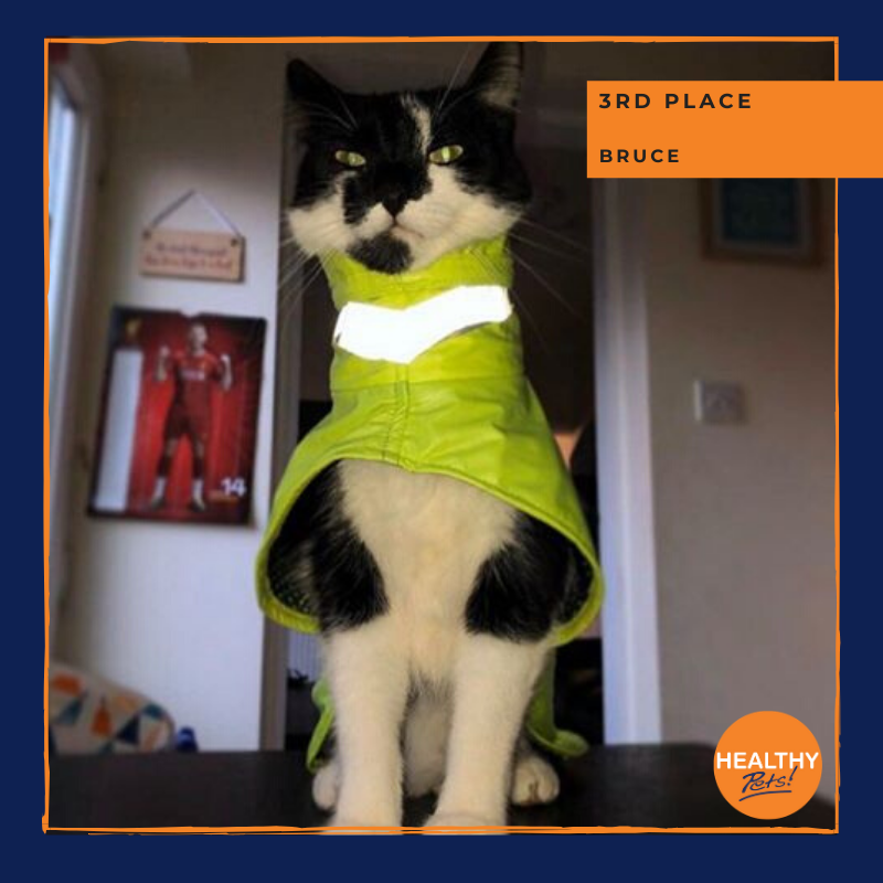 Winning third place in March's #PetPortrait comPETition is Bruce 🙌🌟🐱  Congratulations to Bruce for keeping it safe and stylish this month 😂  #pets #cat #dogs #HealthyPetsInsurance #winner
